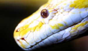 Alabama: Guard Fired for Torturing an Inmate with a Python, but Hired as a Police Officer